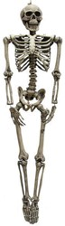 Deco Skelet 160cm