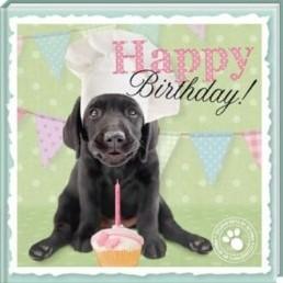 Boek Happy Birthday -Studio pets