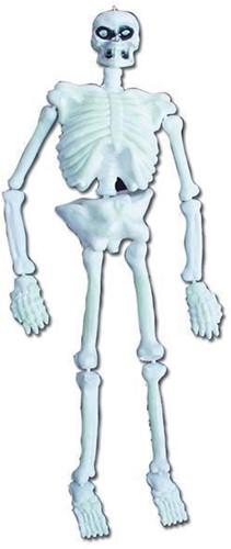 Skelet 3D GID 152cm