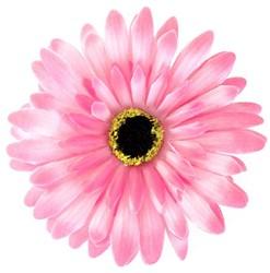Bloemenbroche Gerbera Roze