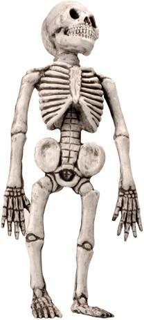Skelet Latex 50cm